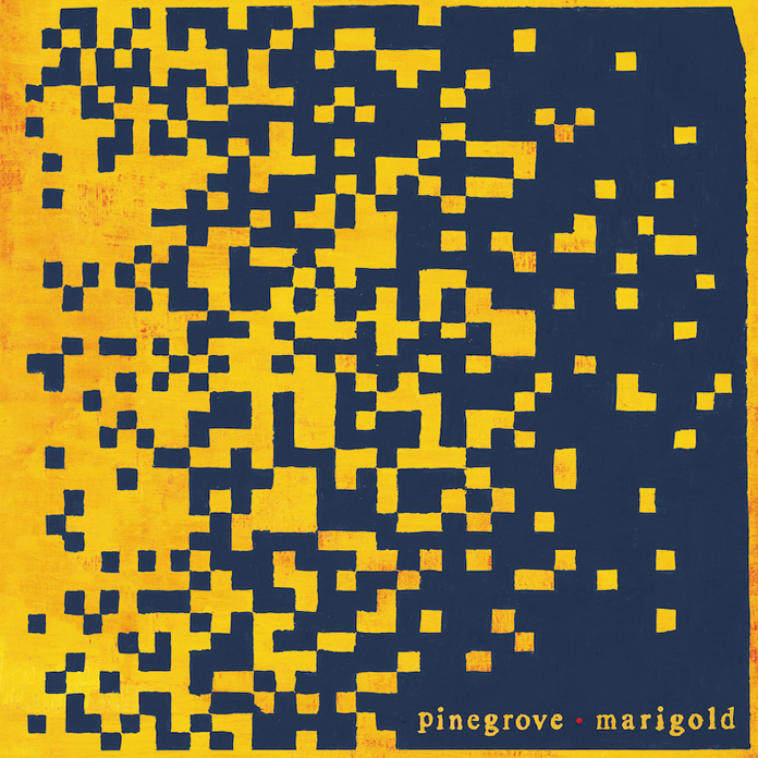 Image result for pinegrove marigold